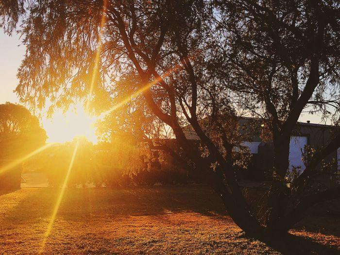Tree Sunlight Sunbeam Lens Flare Sun Nature Sunset Outdoors No People Beauty In Nature Day Scenics Sky