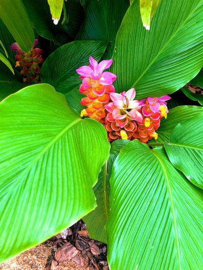 Flor Leaf Plant Part Plant Green Color Flower Freshness Flowering Plant