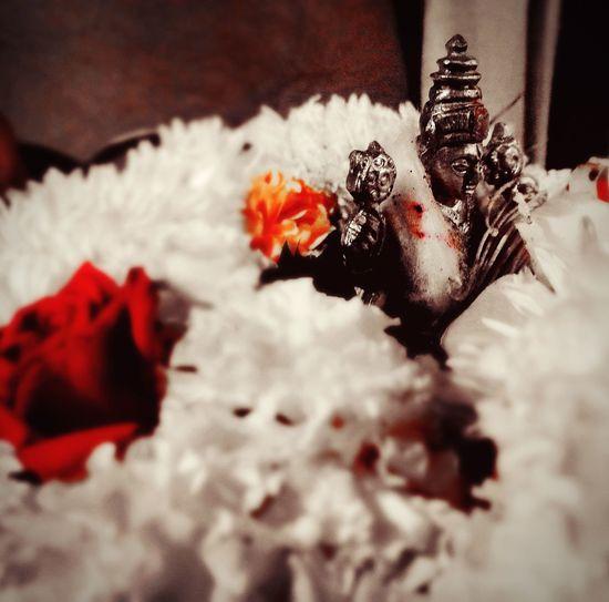God Vishnu God Vishnu Holy Flowers Blessed  EyeEm Selects Flower Fragility Close-up No People Indoors  Day Nature