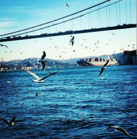 Burası huzur dolu. FSM Baltalimanı Seabirds Ship Bridge Istanbul Istanbuldayasam Bestoftheday EyeEm Best Shots Relaxing