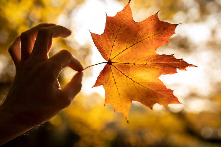 Autumn Leaf Plant Part Human Hand Human Body Part Hand Change Maple Leaf One Person Nature Close-up Focus On Foreground Orange Color Personal Perspective Finger Holding Real People Body Part Human Finger Maple Tree Outdoors Leaves Autumn Collection Natural Condition Human Limb