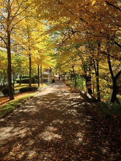 Sunlight falling on footpath amidst trees in park during autumn