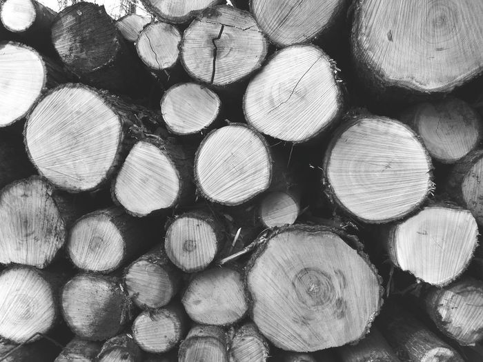 Forest Full Frame Timber Log Backgrounds Abundance Stack Pattern Arrangement Woodpile Large Group Of Objects Textured  Repetition No People Forestry Industry Close-up Day