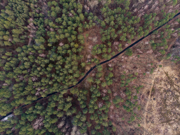 Poland Landscape Landscape_Collection Tree Trees Forest Forest Photography Tranquility Drone  Dronephotography Bueaty In Nature Woods Wood High Angle View Scenics - Nature