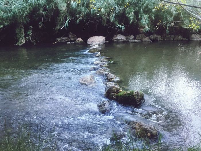 Water Nature Tree Outdoors Day Rock - Object Tranquility River No People Beauty In Nature Stream - Flowing Water Scenics Animal Themes