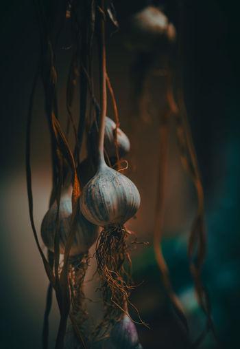 Close-up of garlic clove