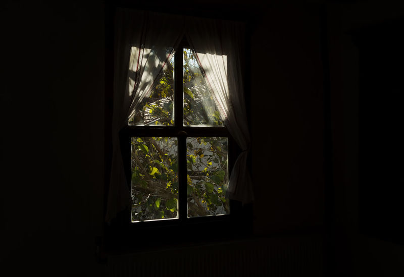 Looking Out Bolu..TURKEY Curtain Day Drapes, Window Coverings, Block Indoors  Lace - Textile Mudurnu Room With A View Squares And Rectangles Tree Turkey Window Window Covering Window View