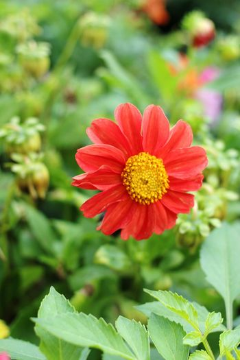 Autumn Nature Flower Beauty In Nature Flower Collection Outdoors