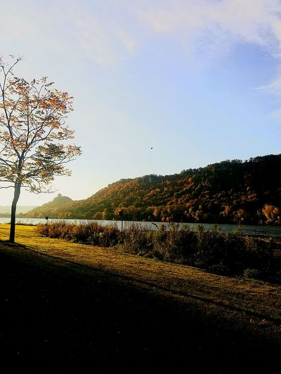 Winona, MN. Nature Beauty In Nature Tree Growth Scenics Sky No People Tranquil Scene Outdoors Sunset Vertical Tranquility Day Agriculture Landscape Mountain Fine Art Photography