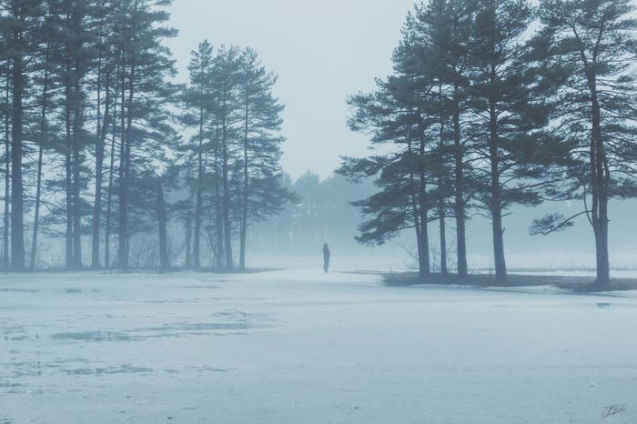 Brumous: (adj.) Of grey skies and winter days; filled with heavy clouds or fog; relating to winter or cold, sunless weather Foggy Day Fog EyeEm Best Shots EyeEm Nature Lover EyeEm Best Edits Taking Photos Nature_collection Landscape_Collection Sony A6000 Exploring