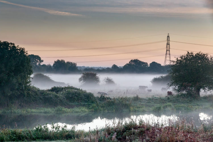 Fog at dawn on banks of River Nene Air Pollution Beauty In Nature Cable Cloud - Sky Electricity  Electricity Pylon Environment Field Fog Hazy  Land Nature No People Outdoors Plant Pollution Power Supply Scenics - Nature Sky Sunset Tranquil Scene Tranquility Tree Water