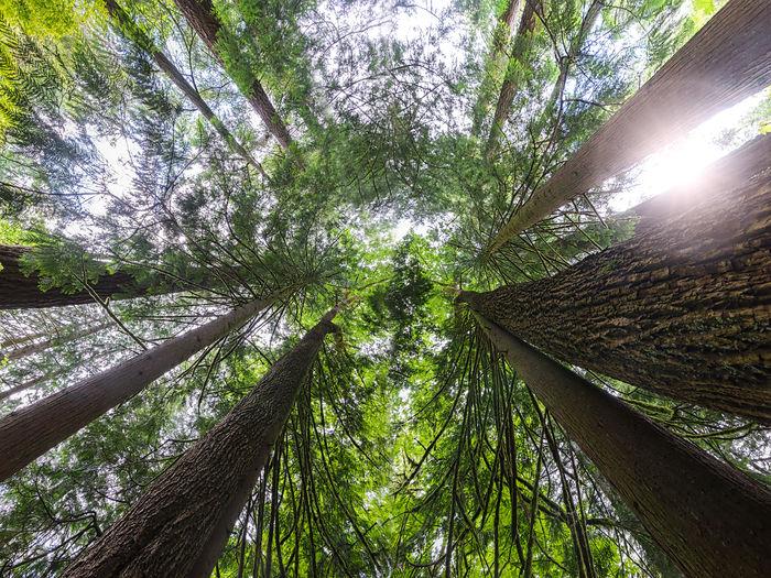 Ferns Forest