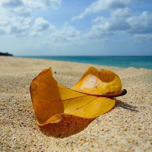 Splendid_beaches Beach Islandlivity Ilivewhereyouvacation Ig_caribbean Iphonesia Andyjohnsonphotography Amazingphotohunter Theblueislands Theworld_thru_youreyes Exploringtheglobe EarthCaptures