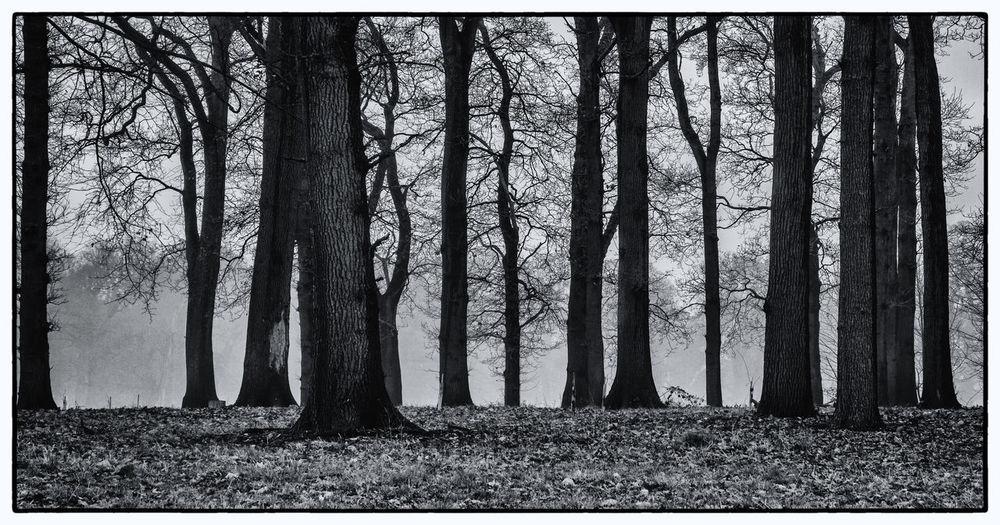 Bleak Forest