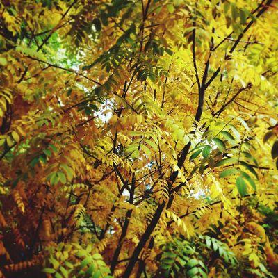 Autumn осень Omsk Природа