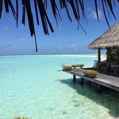 Gangehi Maldives Summer Sea Sand Scuda Diving Dive Padi Enjoy Tag Follow4follow Followme Follow Lifestyle Life Shark Nature Instango Istanday Instantidivita_ Instagood Tagstagram Tagstagram Picoftheday likeforlike
