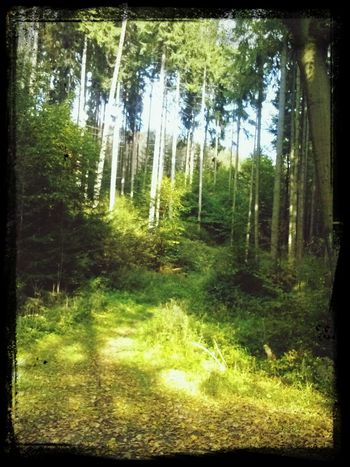 Taking Photos Check This Out Nature Forrest
