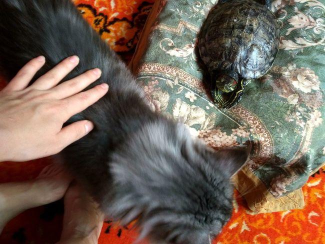 One Person Day кот и черепаха котэ Animal Themes Home Interior Domestic Animals Domestic Cat черепаха Pets Тиша