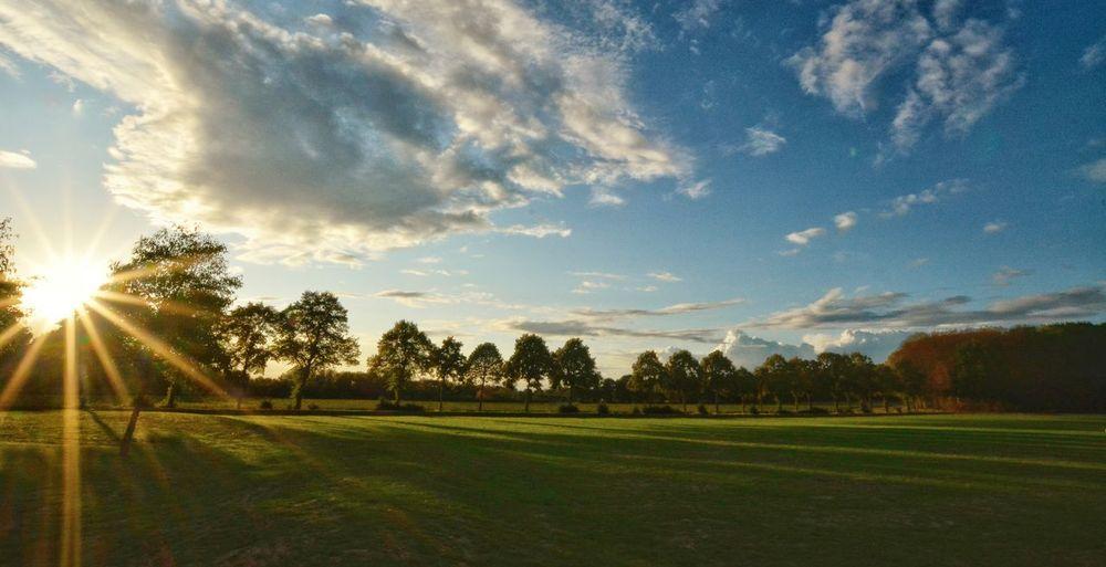 Tree Rural Scene Field Sunlight Sky Grass Landscape Cloud - Sky