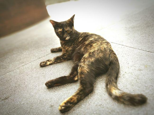 Cat Cat Lovers Animal First Eyeem Photo Central World BKK. Thailand One Animal