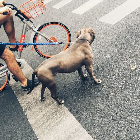 Dog Pets Domestic Animals One Animal Street Bicycle Mammal Outdoors Day Pet Leash Mode Of Transport One Person Dog Cute Pets Cute♡
