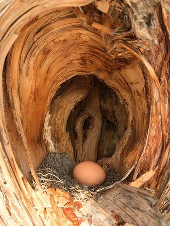EyeEm Selects Egg Bird Nest Outofplace Abstract Chicken Egg Nature