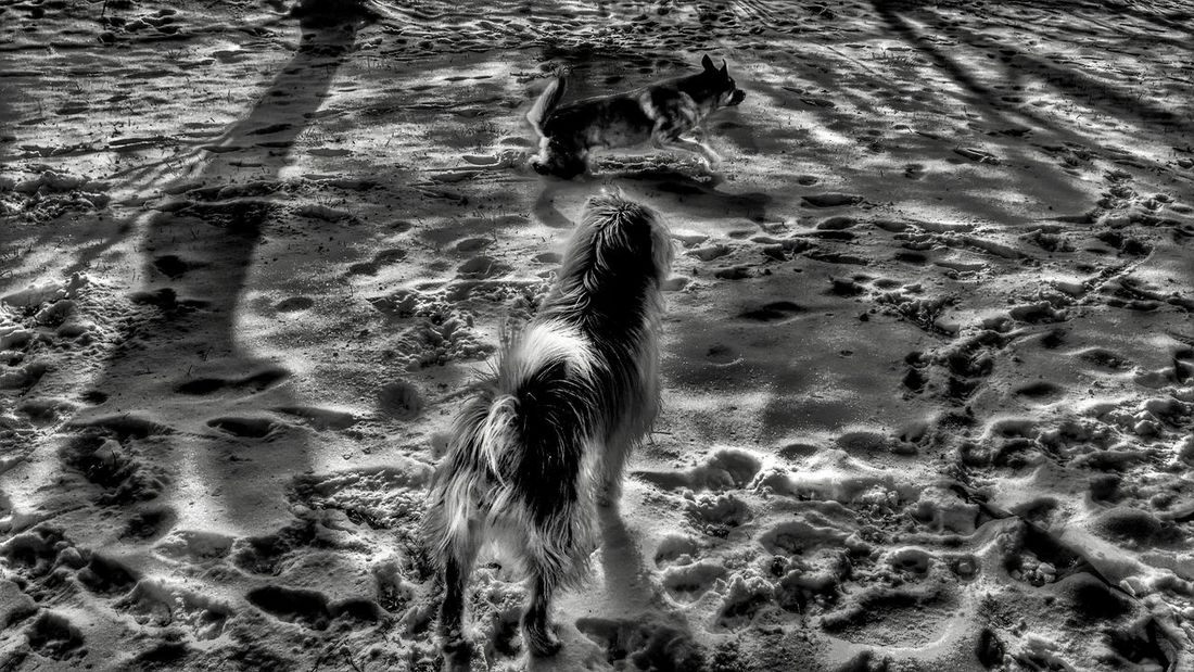 The Impurist Nature Lover Capturing Movement The K9GB Black And White My Dogs Are Cooler Than Your Kids Attack Mode Footprints Winter Sunshine Light And Shadow Tree Silhouette Snow Day My Bw Obsession