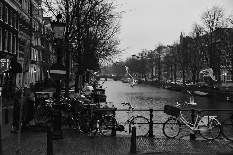 Morning view Early Morning Canal Eye4photography  EyeEm Gallery Blackandwhite Seagull Misty Morning Mood Amsterdam Amsterdam Canal Beauty From Where I Stand City Tree Bicycle City Life Land Vehicle Street Sky Architecture Building Exterior Built Structure Rainy Season Sidewalk