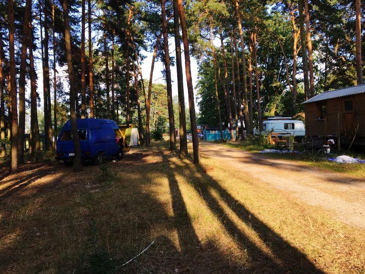 VW Bus Camping Forrest Summertime