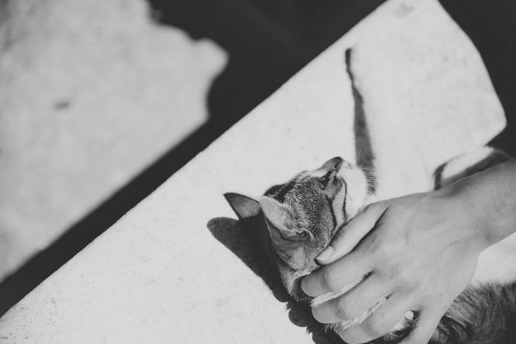 Cropped hand of person stroking cat on seat
