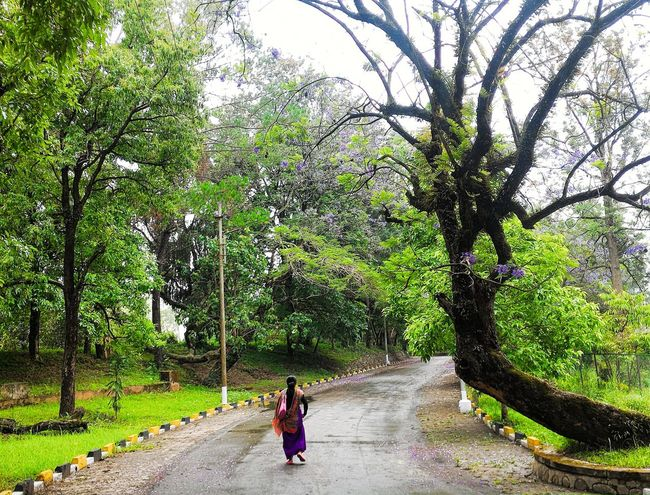 Jack and Randa just not leaving me alone IndiaTrail India Forest Nature Naturephotography Trees On The Road Trees Northeastindia Northeast Manipur Imphal Telling Stories Differently Jacaranda Tree Tree_collection  Tree Kangla Fort
