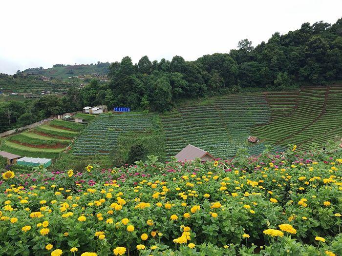 Moncham Flower