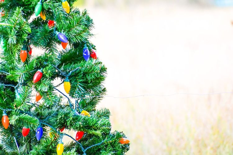 country christmas country life Christmas christmas decoration Celebr EyeEmNewHere Country Christmas Country Life Christmas Christmas Decoration Celebration No People Tradition Christmas Ornament EyeEmNewHere