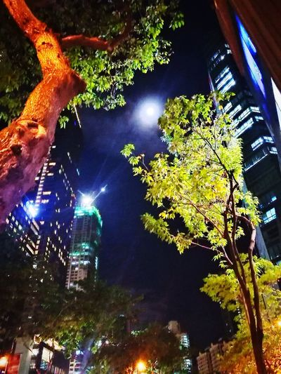 Love looking at the moon Glowing Moonlight Moonlight Sky And Trees Midnight Beauty