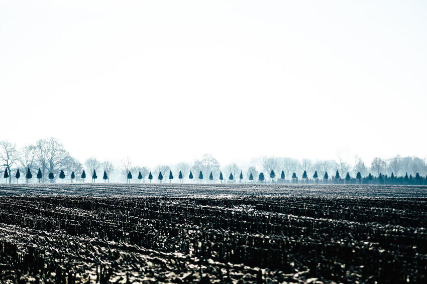 pointed cap farm Agriculture Beauty In Nature Beauty In Nature Field In A Row Nature No People Outdoors Relaxing Row Of Things Row Of Trees Scenics Sky Tranquil Scene Tranquility Tranquility Tree Trees Trees And Sky Finding New Frontiers
