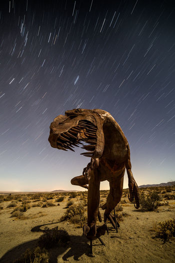 Largest known land predators | Night fell in the desert, but the moon was out and bright. I knew it wouldn't set till 11 pm, so I decided to do star trails. What was cool about it was that the size of the T. Rex sculpture was probably a baby size of what actually roamed around about 67 million years ago. Can't imagine how scary it must've been upon encountering one of the largest known land predators then. Once I got my shots, it was time to pack up and leave for the stallions sculptures. Borrego Springs, CA Desert Dinosaur Nightphotography Animal Themes Astronomy Astrophotography Attraction Beauty In Nature Clear Sky Landscape Long Exposure Metal Work Nature Night No People Outdoors Scenics Sculpture Sky Star - Space Star Trail