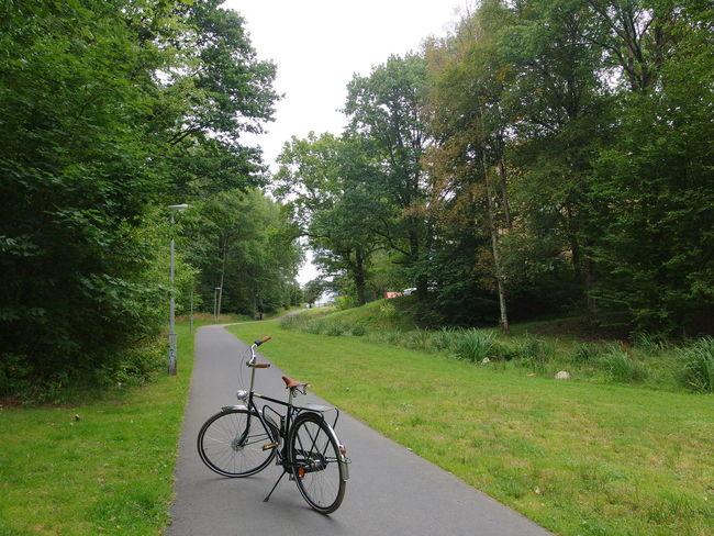Biskopsgården Hisingen Bicycle Bicicleta Bici Bikeporn Bikelife Forrest