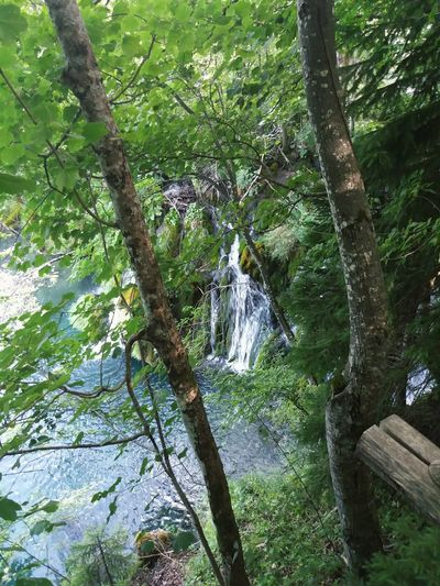 Tree Nature Day Outdoors Beauty In Nature Tranquility Green Color No People Forest Tranquil Scene Water Waterfall Bosc Aigua Salt D'aigua
