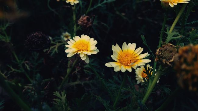 Flower Yellow Nature Plant Growth Outdoors Beauty In Nature Flower Head Fragility Close-up No People Pollen Freshness Day