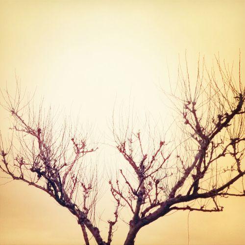 Sky Tree Winter