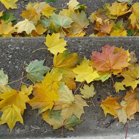 Close-up Yellow Leaf No People Backgrounds Multi Colored Plant Textured  Autumn Fragility Nature Day Outdoors Beauty In Nature Satellite View