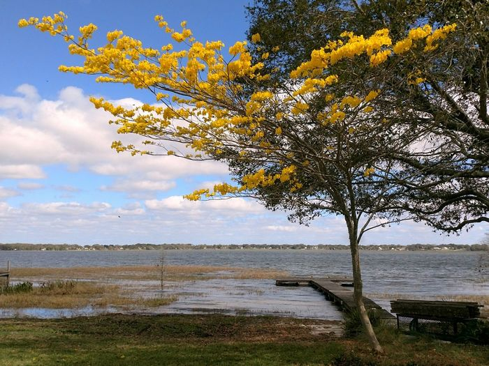 Noticed this inviting scene while driving around... Nature Tree Beach Sky Water Landscape Beauty In Nature Outdoors Tranquil Scene Scenics Cloud - Sky Tranquility Day No People Horizon Over Water Branch Flower Yellow Flower Lake Lakeshore Dock Inviting Florida Life