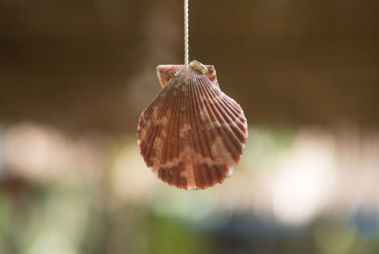 Close-up of dry leaf hanging on plant