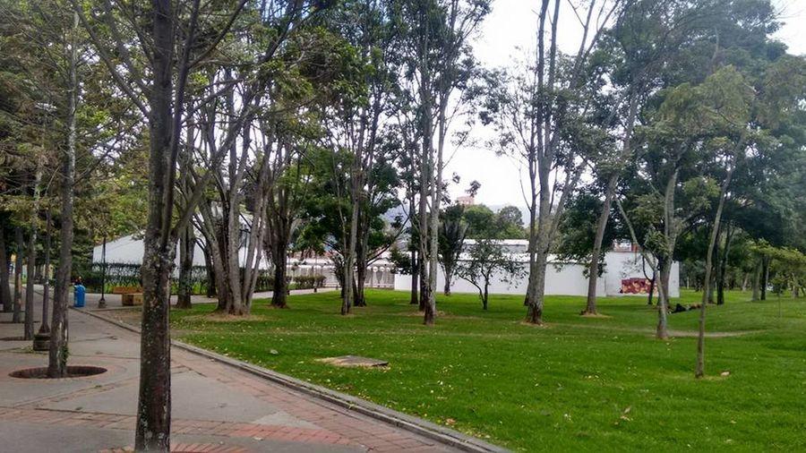 Arboles , Naturaleza UniversidadNacionaldeColombia Universidad Nacional De Colombia Universidad University Campus University Bogota,colombia.