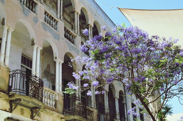 Tel Aviv Flower Architecture Built Structure Purple Building Exterior Plant Outdoors Low Angle View No People Day Nature Sky Bright Colors Blossoms  Blossoms  Blossoming  Blooming Nikon Dslr Blossoming  Blooming Tree NIKON D5300 Plant Israel