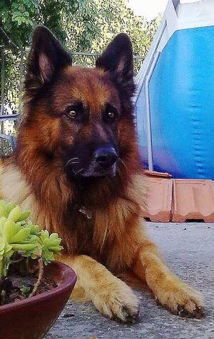 Pets Water Dog Portrait Close-up