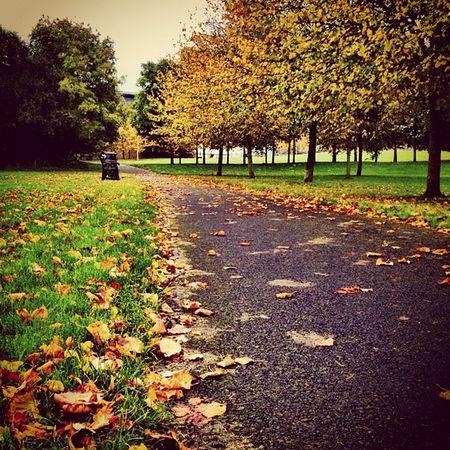 Autumn in #swords park ??? #jj #ebstyles_gf #earlymorning #earlybirdlove #ireland #insta_ireland Ireland Swords Earlymorning  Jj  Earlybirdlove Ebstyles_gf Insta_ireland Insta_ireland_autumn