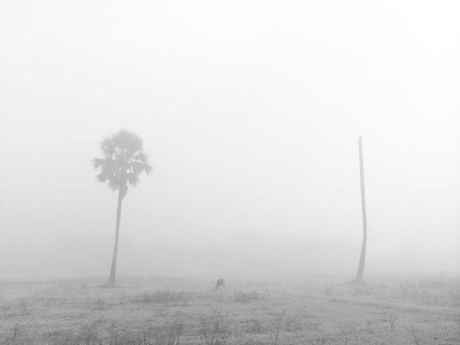 Bangladesh Nature Fog Foggy Morning
