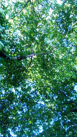 木漏れ日 Sunlight Through Trees Sonnenschein Durch Baüme