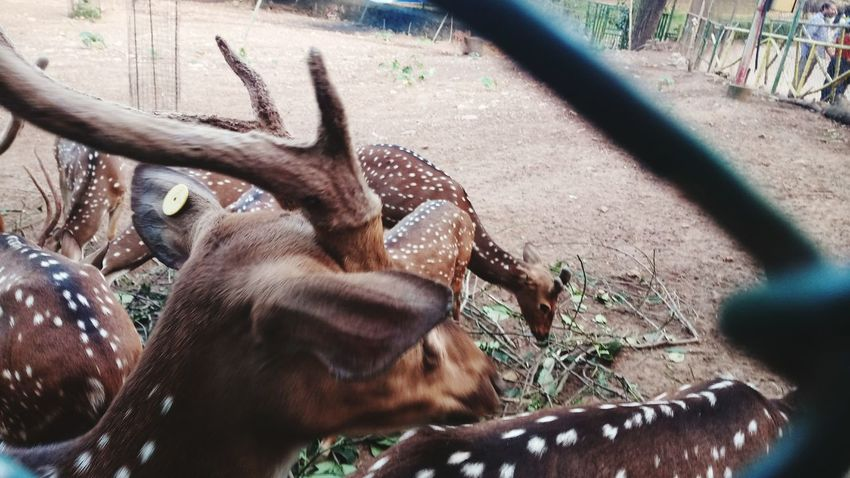 EyeEm Selects Animal Themes Day Outdoors Animals In The Wild No People One Animal Mammal